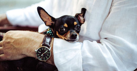 Pet therapy and chronic pain