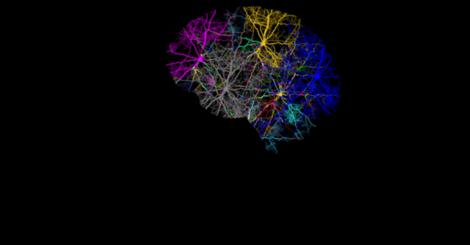 Internal body clocks may affect timing of epileptic seizures