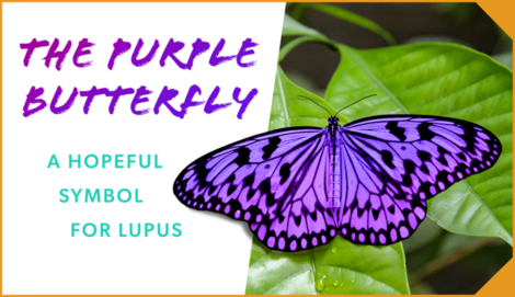 Mylupusteam hero purple butterfly